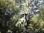 Flying Fox Taman Flora